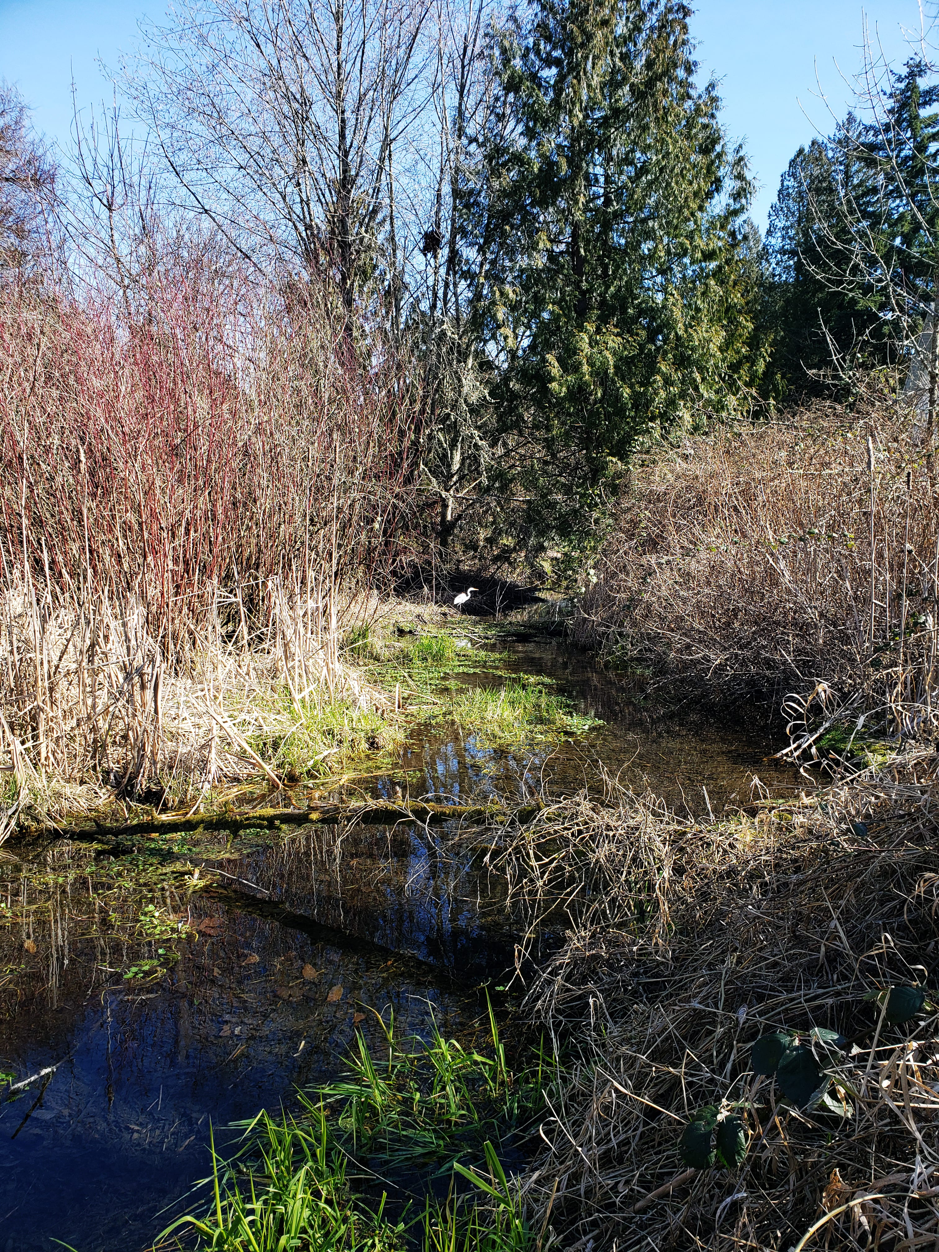 New wildlife finds home at Columbia Springs