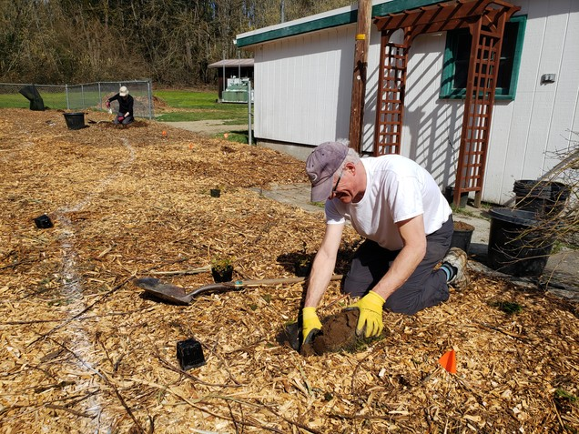 Planting shrubs at Columbia Springs Visitor Center